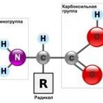 Аминокислоты и пептиды