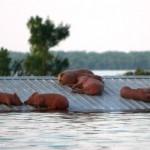 Спасение от наводнения